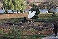 Набережная реки Цны, фигура пчелы (осы, мухи), 22.10.2011 - panoramio.jpg