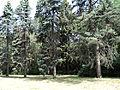 Один з найцінніших зразків садово-паркової культури України знаходиться в селі Устимівка на Полтавщині.JPG