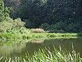 Озеро Білякове влітку (Заказник Хорішки).jpg