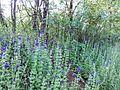 """Парк шума """"Гази Баба"""" 40.jpg"""
