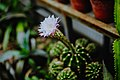 Полярно-альпийский ботанический сад оражерея 4.jpg
