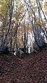 Природа на рез. Беласица.jpg