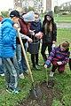 Тернопільська спеціалізована школа № 29 - Школярі висаджують дерева - 14044019.jpg