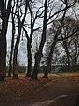 У седнівському парку Лизогубів (доріжка до альтанки).jpg