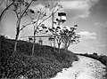גניגר - מגדל הצופים ביער בלפור.-JNF044660.jpeg