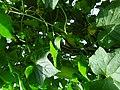 कलालपसे - panoramio (4).jpg