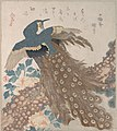 「三ひらの内」松・牡丹に孔雀-Peacock on Pine Tree and Peonies, from the series Three Sheets (Mihira no uchi) MET DP139048.jpg