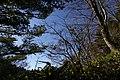 三森山方面山道 - panoramio.jpg