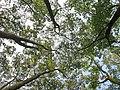 南山植物园-在林中 - panoramio.jpg