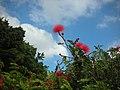 小紅花 - panoramio.jpg