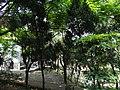 新北市樹林區潭底公園內。 - panoramio (2).jpg