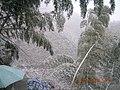 竹林雪景1 - panoramio.jpg