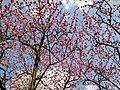 花緑公園 - panoramio.jpg