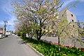 茨戸病院(Barato hospital) - panoramio.jpg