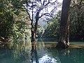 荔波-鸳鸯湖中鸳鸯树 - panoramio.jpg