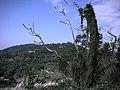 行義路至陽明山 - panoramio - Tianmu peter.jpg