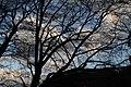 賀茂神社 - panoramio.jpg