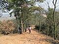 雨母山 - panoramio (5).jpg