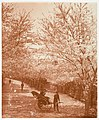 -Street Lined with Cherry Trees, Woman in Rickshaw- MET DP136186.jpg