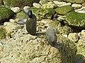 16-05-2017 Balancing Stones on Praia da Balbina (1).JPG