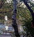 170520111787 Усадьба Расторгуева Л.И.- Харитонова, висячий мост и беседка.jpg