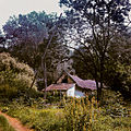 1850's years fishermen's houses, in the Tisza River Photo 1980.jpg