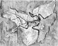1911 Britannica-Archaeopteryx-Berlin.png