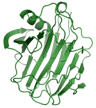 Cellulase - Image: 1NLRribbon