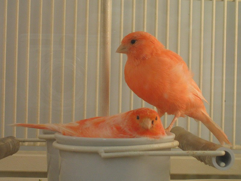 world s coolest looking orange colored creatures