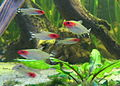 20080113 Aquatopia - Rivierenhof (050).jpg