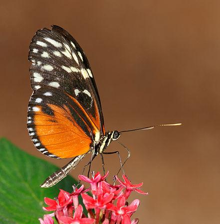 2011-08-08 14-40-20-papillon-hunawihr.jpg
