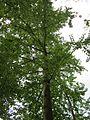 20130509Habsterwiesen Saarbruecken21.jpg