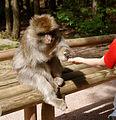 2016-04-21 13-55-56 montagne-des-singes.jpg