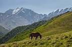 2019 - Pshav-Khevsureti National Park - Horse on the Khidotani ridge.jpg