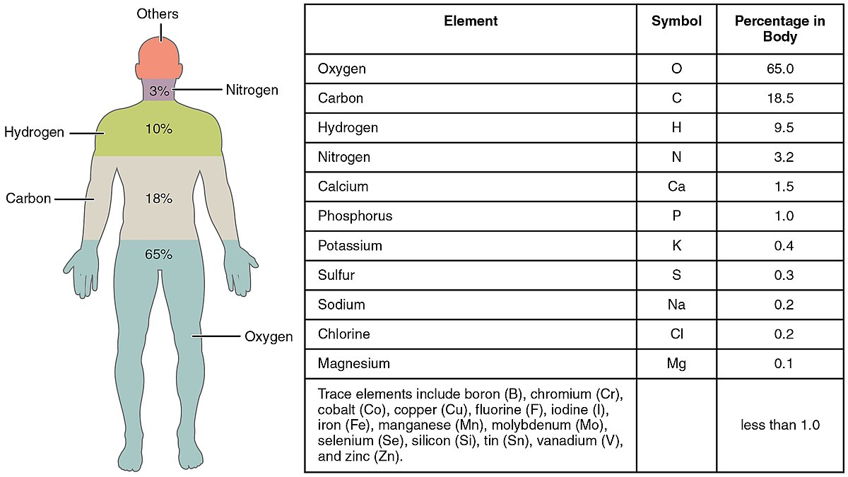 Composition of the human body wikipedia gamestrikefo Images