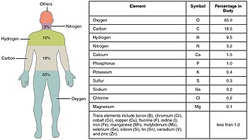 201 Elements of the Human Body-01.jpg