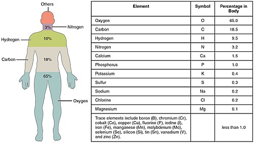 Composition Of The Human Body Wikipedia