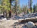 2021 path to May lake Yosemite 2.jpg