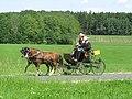 21te Rammenauer Schlossrundfahrt der Pferdegespanne (121).jpg
