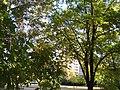 27.09.2009 - panoramio.jpg