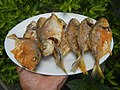 3412Fried fish in the Philippines 11.jpg