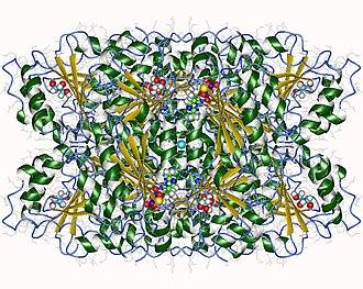 Benzoylformate decarboxylase - Benzoylformate decarboxlyase tetramer, Pseudomonas putida