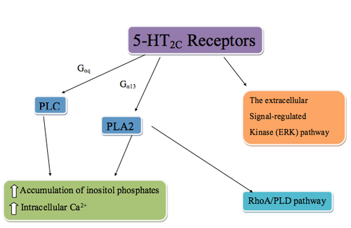 5-HT2c receptor agonist - Wikipedia, the free encyclopedia