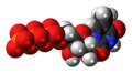 5-Methyluridine triphosphate anion 3D spacefill.png