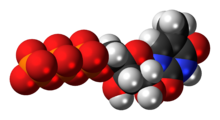 Space-filling model of the 5-methyluridine triphosphate molecule as an anion