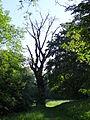 617683 A 683 Krakow Krzesławice Wankowicza 25 park w zespole dworsko parkowym 38.JPG
