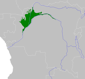 Congolese rainforests - Western Congolese swamp forests