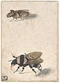 A Bumble Bee and a Fulgoroid MET DP800022.jpg