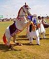 A Dancing Horse in Pakistan.jpg