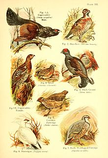 A book of birds (Plate XII) (6022265374).jpg